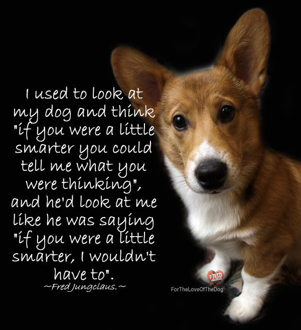 Funny Sayings Thought And Quotes: For The Love Of Dogs