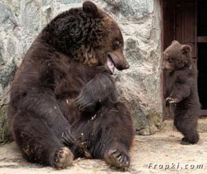 bearstory3.jpg